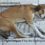 5 Ways to Fight Fatigue if You Are Feeling too Tired